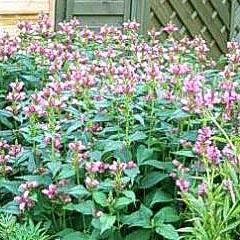 Petit jardin le petit magazine du jardinage et des plantes - Petit jardin graines et plantes le havre ...