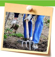 Magazine petit jardin n51 novembre 2010 jardinage - Quoi planter en novembre ...