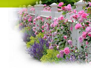 Magazine petit jardin n59 juillet 2011 jardinage plantes et fleurs - Petit jardin graines et plantes le havre ...