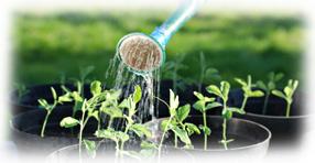 http://www.graines-et-plantes.com/articles/2011/juin/arrosage-au-jardin-economiser-l-eau.jpg