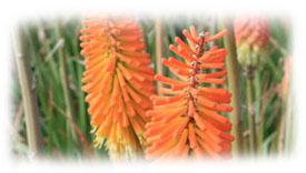 Magazine petit jardin n57 mai 2011 jardinage plantes et fleurs - Comment reconnaitre physalis comestible ...