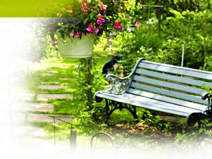 magazine petit jardin n 62 octobre 2011 jardinage plantes et fleurs. Black Bedroom Furniture Sets. Home Design Ideas