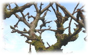 Traitement d 39 hiver des arbres fruitiers - Traitement arbres fruitiers ...
