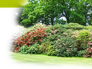 magazine petit jardin n 71 juillet 2012 jardinage plantes et fleurs. Black Bedroom Furniture Sets. Home Design Ideas