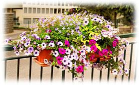 balcon fleuri plein soleil id e d 39 image de fleur. Black Bedroom Furniture Sets. Home Design Ideas
