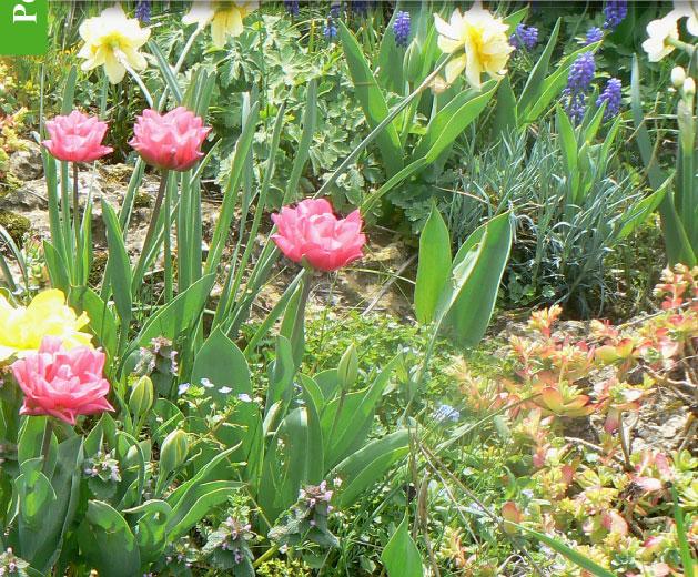 magazine petit jardin n 67 mars 2012 jardinage. Black Bedroom Furniture Sets. Home Design Ideas
