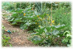 Jardin de curé <small>le jardin de nos aïeux.</small>
