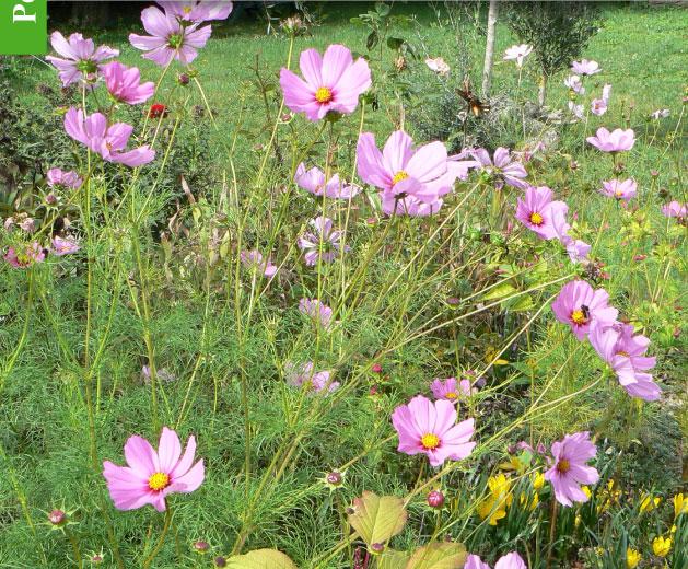 Emejing Fleurs De Jardin En Septembre Photos - Design Trends 2017 ...