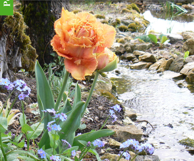 Magazine petit jardin n 79 avril 2013 jardinage for Magazine jardinage