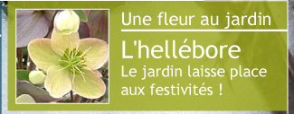 Lire article : Le cyclamen