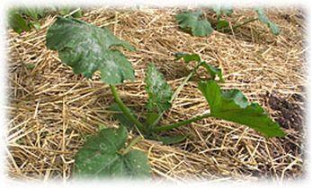 Le recyclage des d chets verts au potager - Comment congeler des haricots verts frais du jardin ...