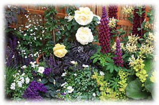 magazine petit jardin n 78 mars 2013 jardinage plantes et fleurs. Black Bedroom Furniture Sets. Home Design Ideas