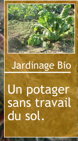 Magazine petit jardin n 97 decembre 2014 jardinage for Magazine jardinage