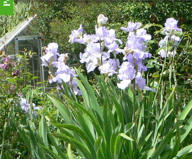 magazine petit jardin n 91 mai 2014 jardinage plantes et fleurs. Black Bedroom Furniture Sets. Home Design Ideas