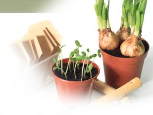 Magazine petit jardin n 89 mars 2014 jardinage plantes et fleurs - Petit jardin graines et plantes le havre ...