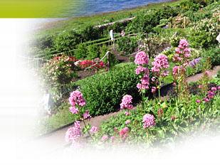 magazine petit jardin n 96 novembre 2014 jardinage plantes et fleurs. Black Bedroom Furniture Sets. Home Design Ideas