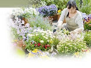 Magazine petit jardin n 94 septembre 2014 jardinage plantes et fleurs - Petit jardin graines et plantes le havre ...