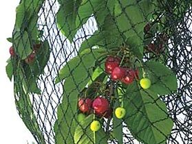 Audacieuse Filet de protection contre oiseaux et insectes QS-64
