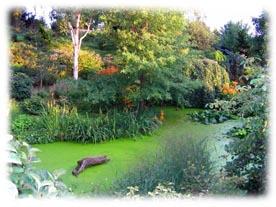 Le jardin du bois marquis - Jardin bois marquis vernioz colombes ...