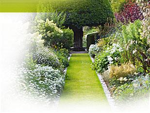magazine petit jardin n 107 novembre 2015 jardinage. Black Bedroom Furniture Sets. Home Design Ideas