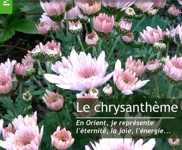Magazine Petit Jardin N°106 - Octobre 2015 - Jardinage, plantes et ...