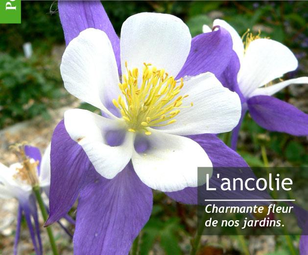 Magazine Petit Jardin N°105 - Septembre 2015 - Jardinage, plantes et ...