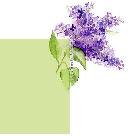 jardiner malin althea arbuste fleur fiche
