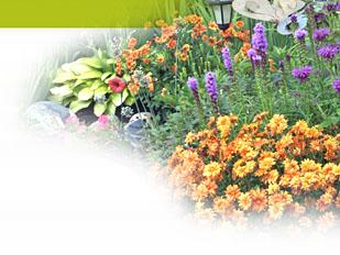 Magazine petit jardin n 119 decembre 2016 jardinage for Plantes pour jardin anglais