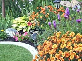 Créer un jardin à partir d\'un terrain en friche couvert de broussailles
