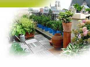 magazine petit jardin n 110 fevrier 2016 jardinage plantes et fleurs. Black Bedroom Furniture Sets. Home Design Ideas