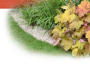 Magazine petit jardin n 110 fevrier 2016 jardinage plantes et fleurs - Petit jardin graines et plantes le havre ...