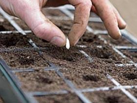 Les semis précoces en intérieur