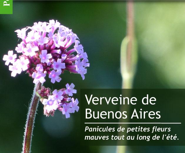 magazine petit jardin n 115 juillet 2016 jardinage plantes et fleurs. Black Bedroom Furniture Sets. Home Design Ideas