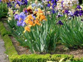Créer un jardin à partir d\'un terrain en friche couvert de ...