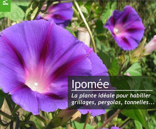 magazine petit jardin n 116 septembre 2016 jardinage plantes et fleurs. Black Bedroom Furniture Sets. Home Design Ideas