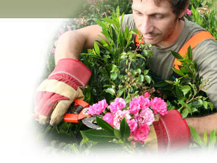 magazine petit jardin n 123 avril 2017 jardinage plantes et fleurs. Black Bedroom Furniture Sets. Home Design Ideas