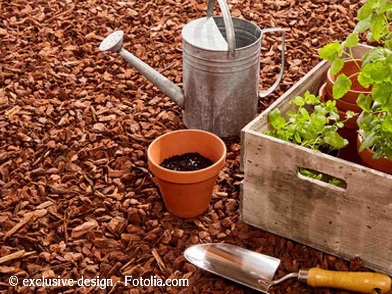 Echange de graines troc aux plantes et boutures for Technique jardinage