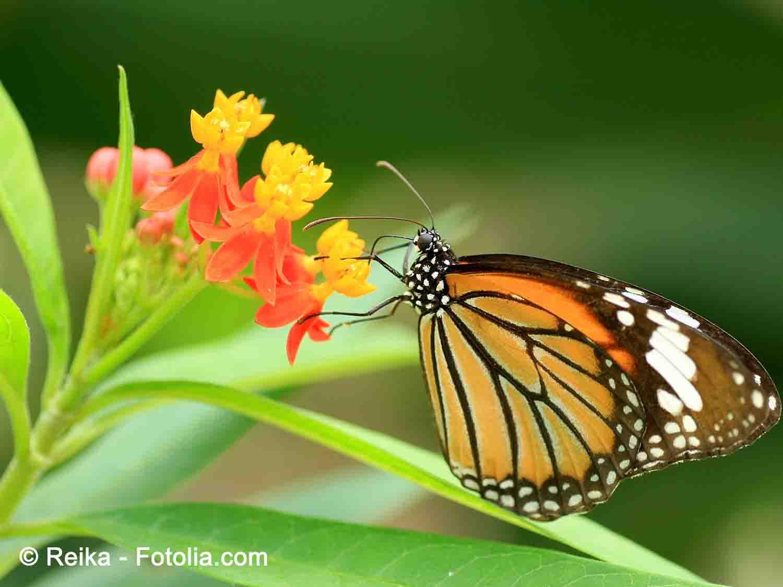 Graines De Fleurs Qui Poussent Très Vite des fleurs pour attirer les insectes pollinisateurs