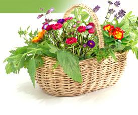 Magazine petit jardin n 79 avril 2013 jardinage plantes et fleurs - Petit jardin graines et plantes le havre ...