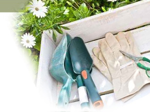 magazine petit jardin n 58 juin 2011 jardinage plantes et fleurs. Black Bedroom Furniture Sets. Home Design Ideas