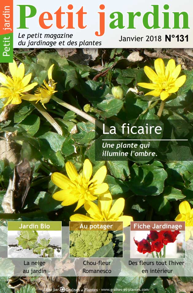 magazine petit jardin n 131 janvier 2018 jardinage plantes et fleurs. Black Bedroom Furniture Sets. Home Design Ideas