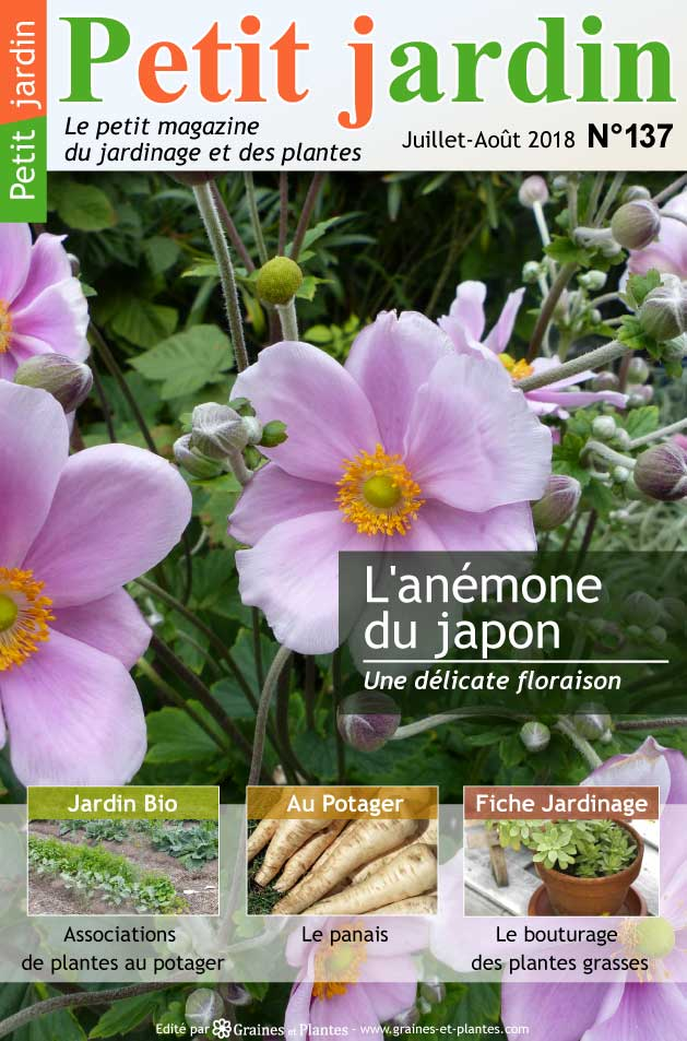magazine petit jardin n 137 juillet 2018 jardinage. Black Bedroom Furniture Sets. Home Design Ideas