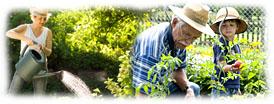 Calendrier de jardinage conseils et travaux au jardin for Calendrier travaux jardin