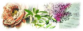 Informations sur les plantes for Encyclopedie plantes interieur