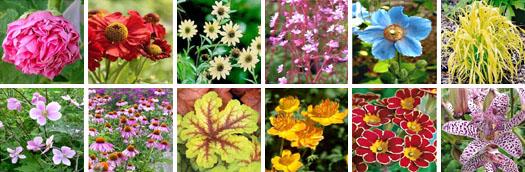 Magazine petit jardin n 72 septembre 2012 jardinage for Ventes de plantes par internet