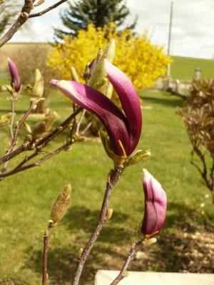 Les fleurs de maman jardin virtuel for Blythe le jardin de maman