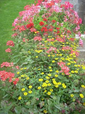 Les balbutiements d 39 un tout petit jardin jardin virtuel for Tout petit jardin