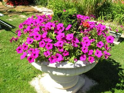 Le clos des cedres jardin virtuel for Vasques pour fleurs jardin