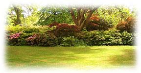 cr er un jardin l 39 ombre d 39 une haie. Black Bedroom Furniture Sets. Home Design Ideas