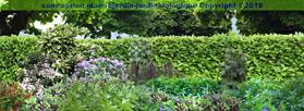 Cr er un jardin l 39 ombre d 39 une haie for Amenagement jardin ombre